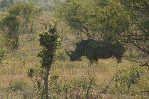 24 timer etter at vi kjørte inn i Kruger hadde damene sett alle de fem store (the Big Five) som er leopard, løve, bøffel, elefant og neshorn